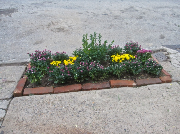 Creative urban intervention! A sidewalk garden grows.