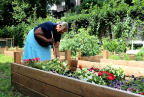 Mrs. Ada Pullet in W Rockland St's community garden