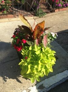 The sidewalk planter in front of our house!