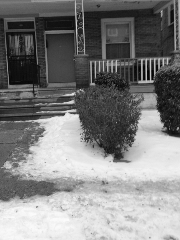 Close-up of the above pictured un-shoveled rental property on W Rockland Street.