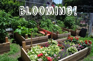 rockland_blooming